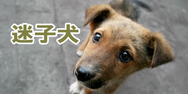 迷子犬の掲示板 : 迷い犬と保護した犬の情報 - dogoo.com