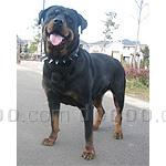 ロットワイラー 犬種の画像