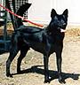 甲斐犬 画像 写真  211