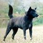 甲斐犬 画像 写真  213