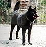 甲斐犬 画像 写真  214