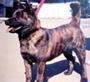 甲斐犬 画像 写真  210