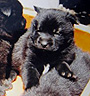甲斐犬 画像 写真  209