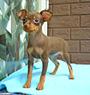 犬種 ミニチュア・ピンシャー 745