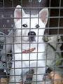 紀州犬 画像 写真  221