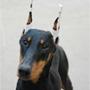 犬種 ドーベルマン 482