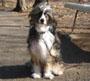 チャイニーズ・クレステッド・ドッグ 画像 写真  422