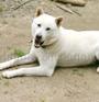 紀州犬 画像 写真  224