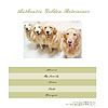 AUTHENTIC GOLDEN RETRIEVERSへ