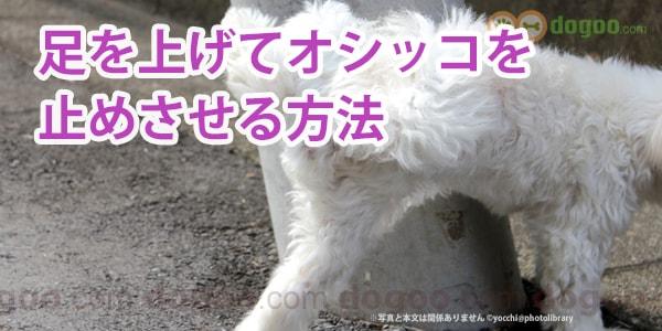 こ 犬 が っ ない オシ 出