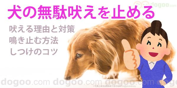 吠える しつけ 犬 【ドッグトレーナー監修】愛犬が散歩中に吠えてしまう原因や理由、しつけ方法、対策は?|ANA Travel