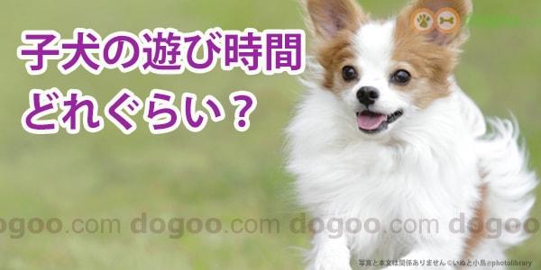 時間 子犬 散歩