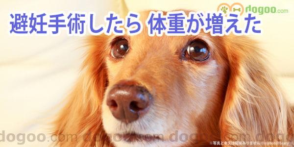 手術 後 犬 の 避妊
