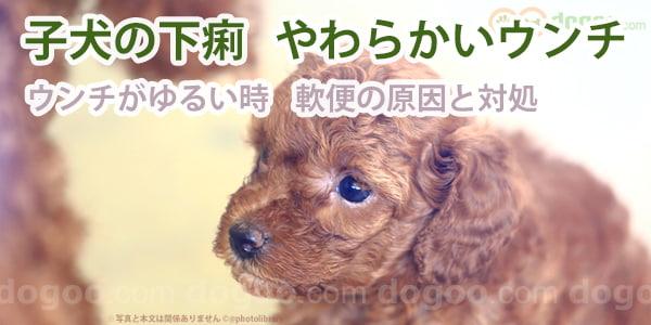 ゆるい 子犬 うんち 子犬が下痢をする4つの原因!元気はあるけどウンチに血が混ざる・ゼリー状な時の対処法は? わんこの本音とドッグフード