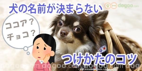 犬の名前が決まらない つけ方のコツ 犬のq A集 名付け 命名 Dogoo Com