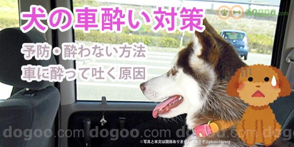 酔い 犬 車