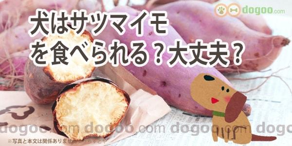 が 野菜 犬 食べ られる