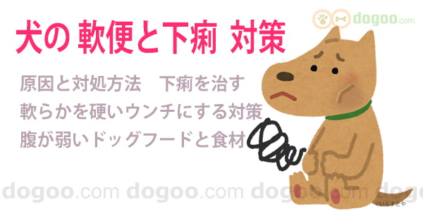 下痢 食事 犬