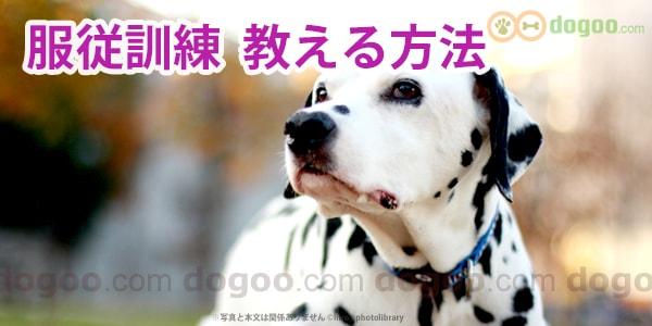 犬の服従訓練、効果的なやり方やコツ | 犬のQ&A集しつけ - dogoo.com