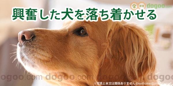 しつけ 仕方 の の 犬